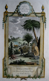 BRAZIL  MOORES TRAVELS C1778